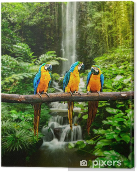 Blue-and-Yellow Macaw Canvas Print - Themes