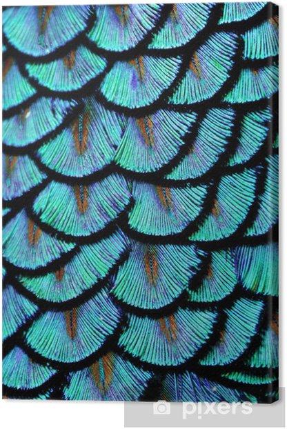 Blue Feathers Canvas Print - Animals