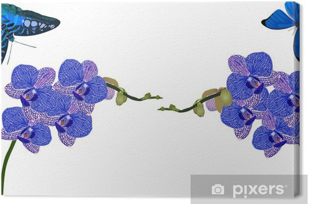 blue orchids and butterflies isolated on white Canvas Print - Flowers