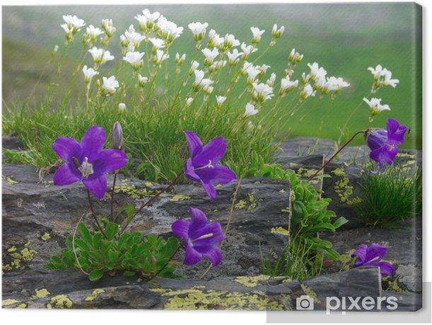 bluebell-2 Canvas Print - Flowers