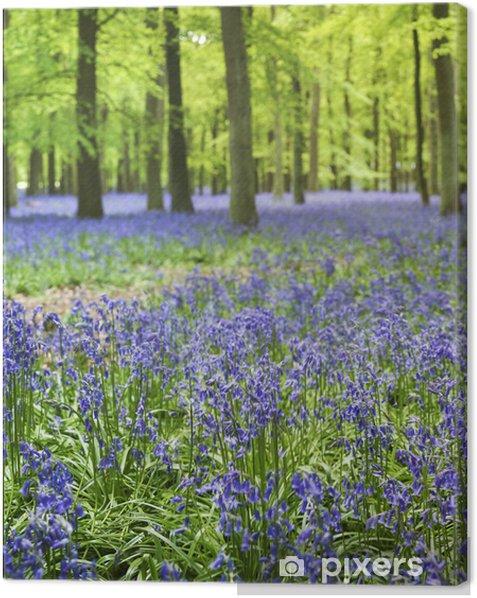 bluebell woods ashridge berkhamsted hertfordshire Canvas Print - iStaging