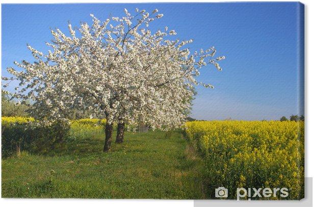 Blühender Apfelbaum Canvas Print - Apple trees