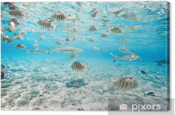 Bora Bora underwater Canvas Print - Fishes