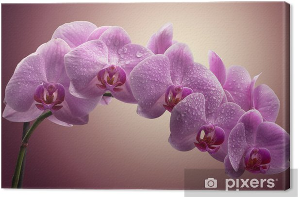 bouquet of magenta orchids Canvas Print - Themes