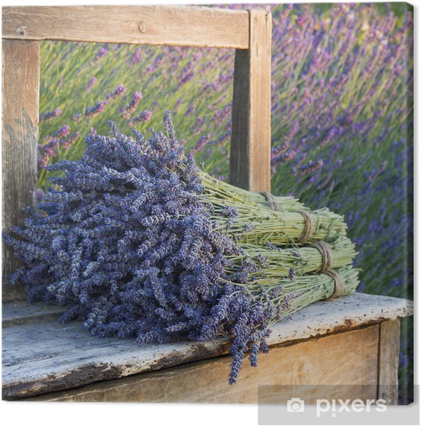Bouquets on lavenders on a old bench Canvas Print - Styles