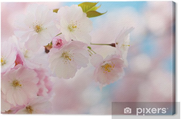 Branch of Japanese cherry with blossom Canvas Print - Styles