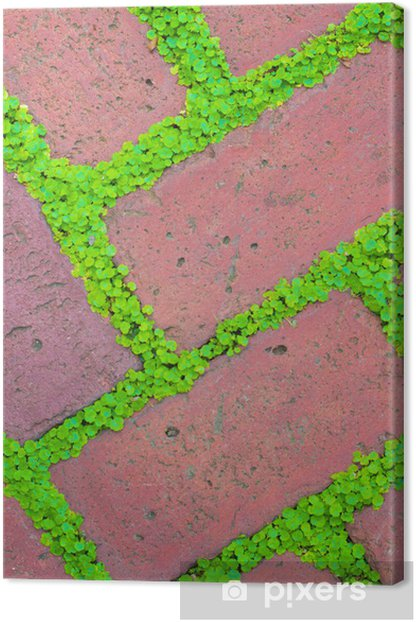 Brick Pavers and Ground Cover Canvas Print - Home and Garden