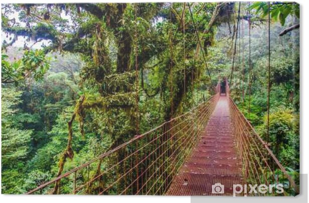 Bridge in Rainforest - Costa Rica - Monteverde Canvas Print - Landscapes