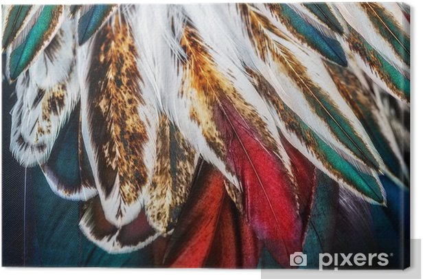 Bright brown feather group of some bird Canvas Print - Animals