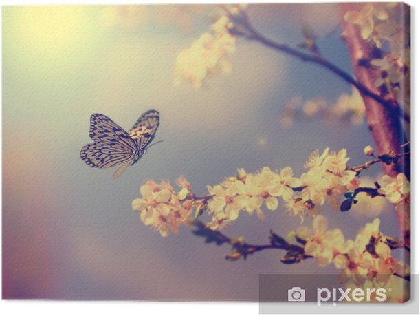 Butterfly and cherry blossom Canvas Print - Themes