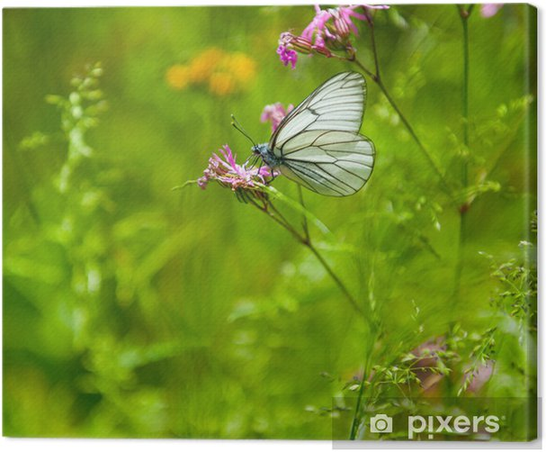 Butterfly on the flower Canvas Print - Other Other