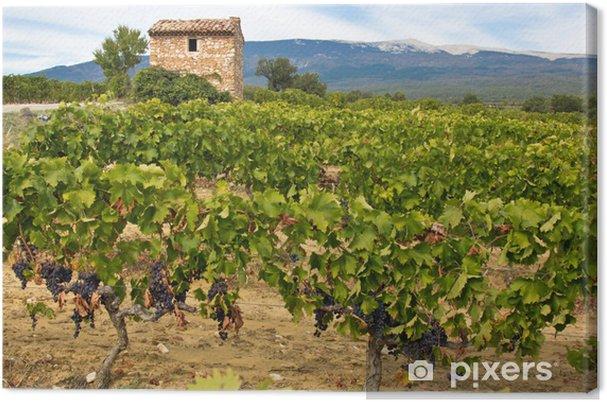 Champ De Vigne cabanon dans une champ de vigne canvas print • pixers® • we live to