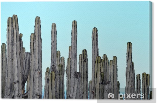 Cacti Color Photography Canvas Print - Plants and Flowers