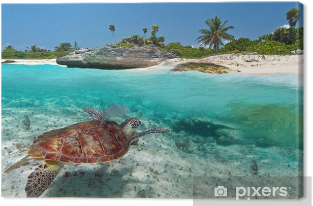 Caribbean Sea scenery with green turtle in Mexico Canvas Print - Themes