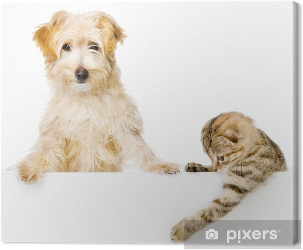 Cat and Dog above white banner looking at camera. isolated Canvas Print - Destinations