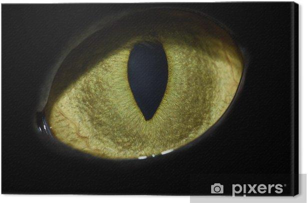 cat's eye Canvas Print - Mammals