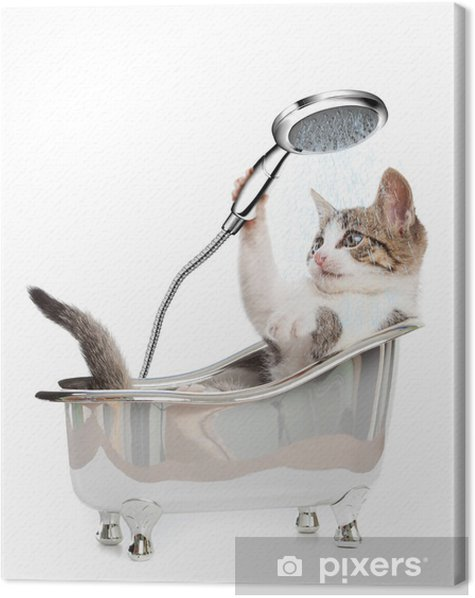 Cat shower Canvas Print - Wall decals