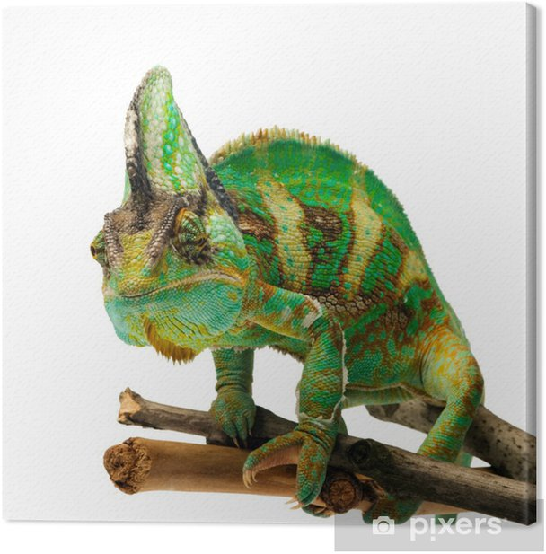 chameleon Canvas Print - Other Other