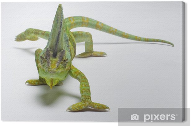 Chameleon Canvas Print - Themes