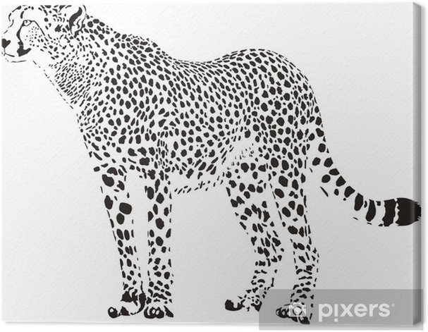 cheetah - black and white vector illustration Canvas Print - Wall decals