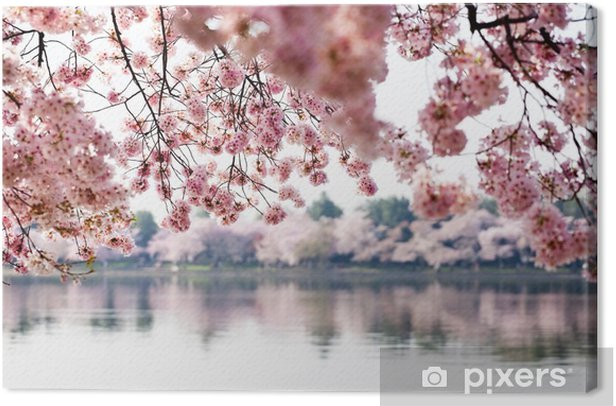 Cherry Blossoms over Tidal Basin in Washington DC Canvas Print - Themes
