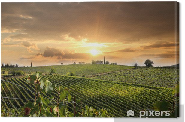 Chianti vineyard landscape in Tuscany, Italy Canvas Print - Themes