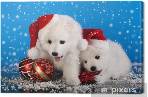 Christmas Puppies.Christmas Puppies White Pomeranian Spitz Wearing A Santa Hat Canvas Print