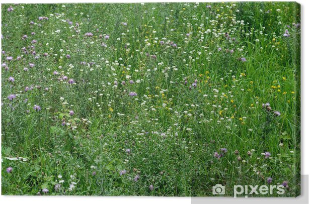 Close-up Image of Spring Meadow with Green Grass and Field Flowe Canvas Print - Seasons