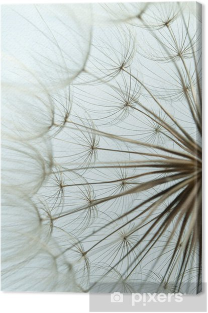 Close-up of dandelion seed Canvas Print - Themes