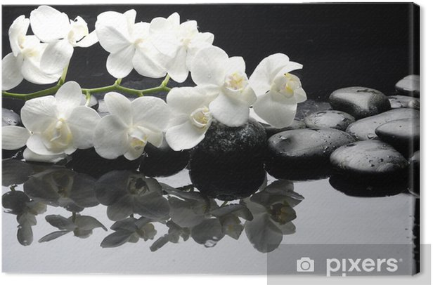 Close up white orchid with stone water drops Canvas Print - Styles