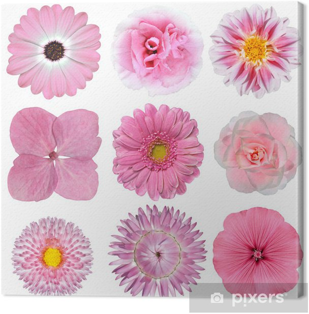 Collection of Pink White Flowers Isolated on White Canvas Print - Flowers