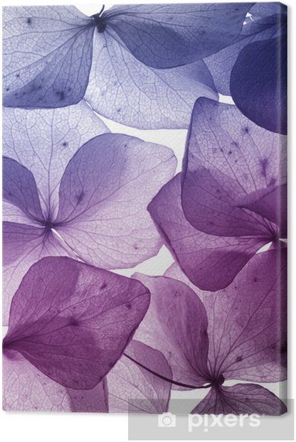 colorful flower petal closeup Canvas Print - Themes