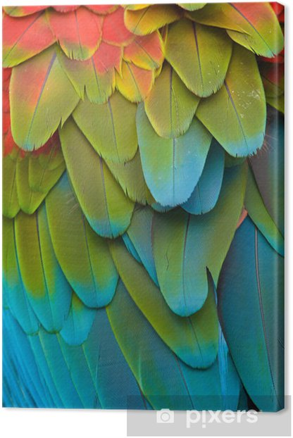 Colorful Macaw Plumage Canvas Print - Themes