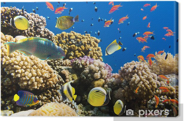 Coral and fish Canvas Print - Themes