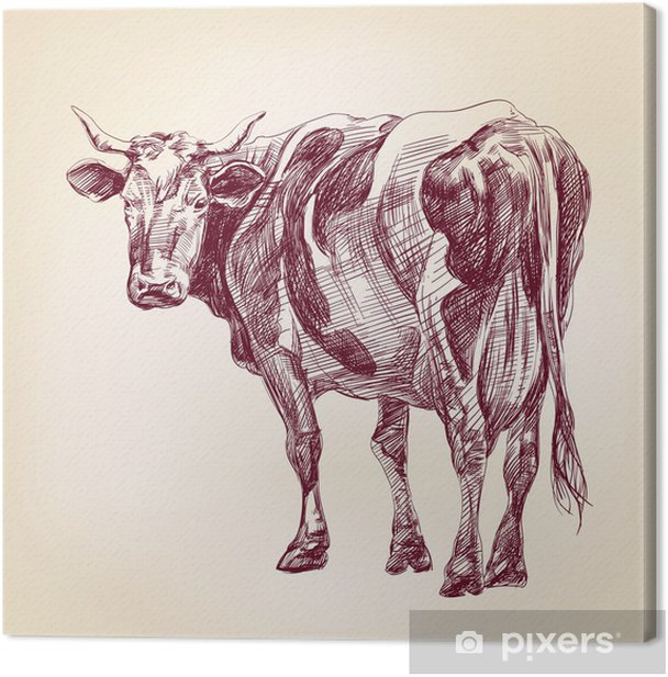 cow hand drawn vector llustration realistic sketch Canvas Print - Mammals