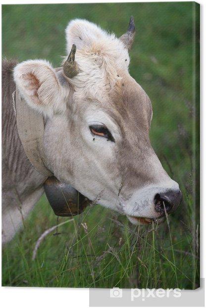 cow Canvas Print - Mammals