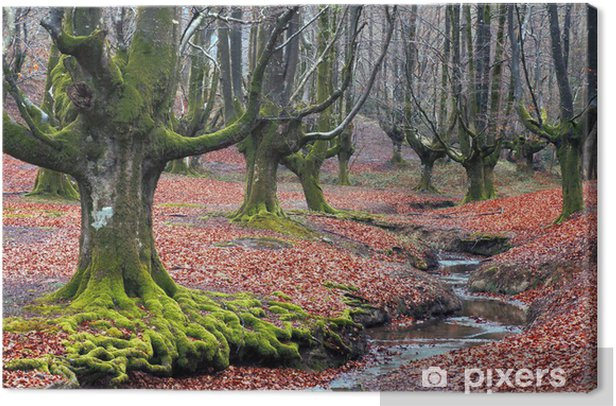 creepy forest with a river and green roots Canvas Print