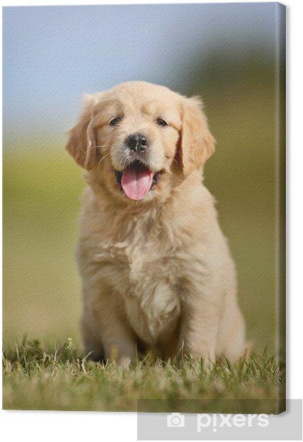 Cute golden retriever puppy Canvas Print