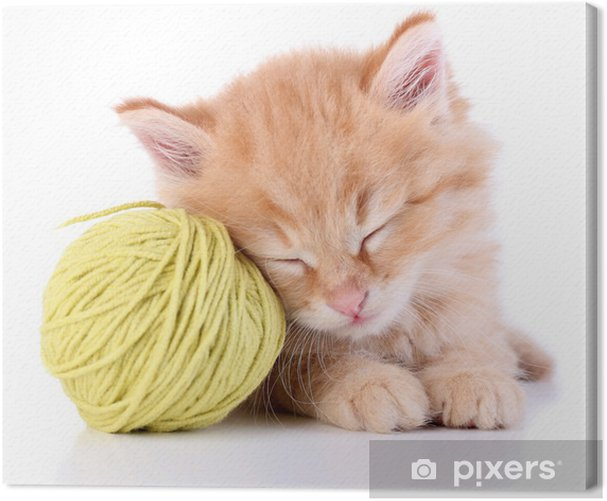 Cute little red kitten and ball of thread isolated on white Canvas Print - Mammals