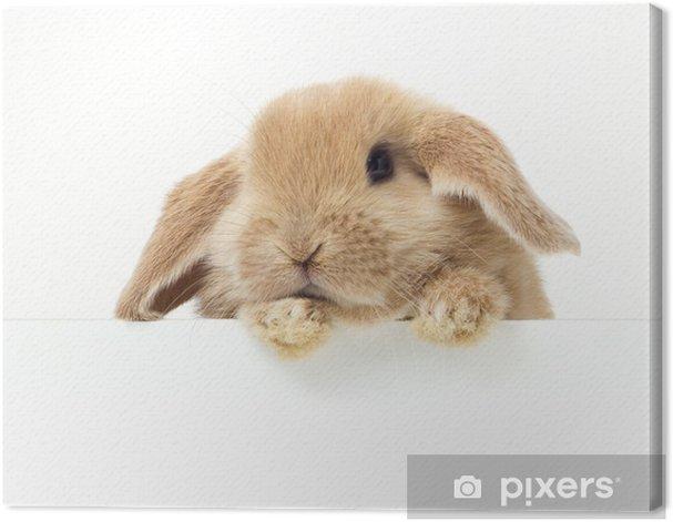 Cute Rabbit. Close-up portrait on a white background Canvas Print - Rabbits