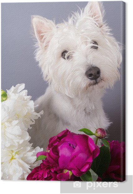 Cute Small White Dog With Flowers Canvas Print Pixers We Live