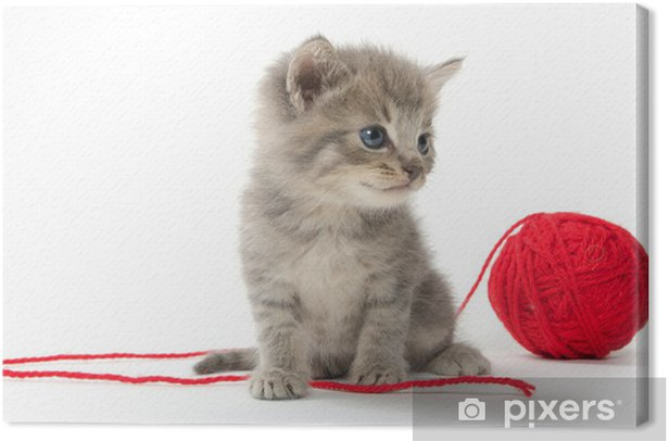 Cute tabby kitten with red ball of yarn Canvas Print - Mammals