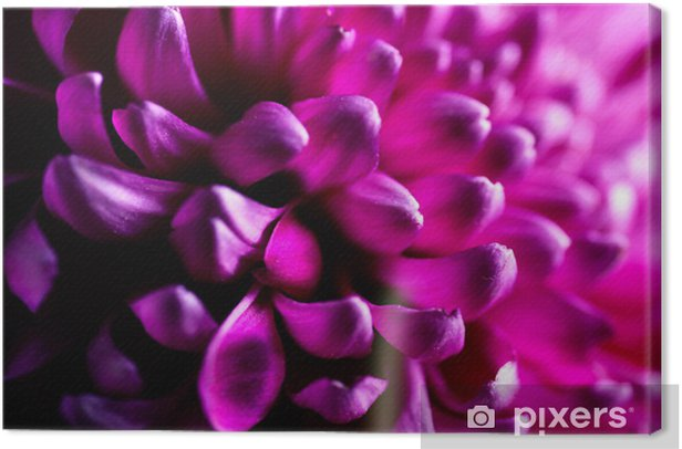 Dahlia autumn flower petals closeup Canvas Print - Flowers