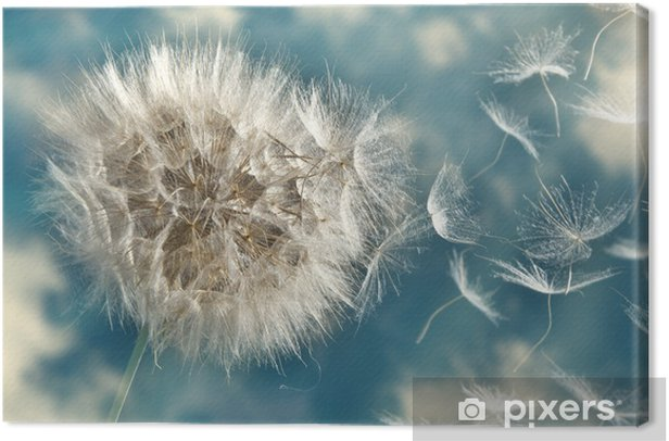 Dandelion Loosing Seeds in the Wind Canvas Print - Themes
