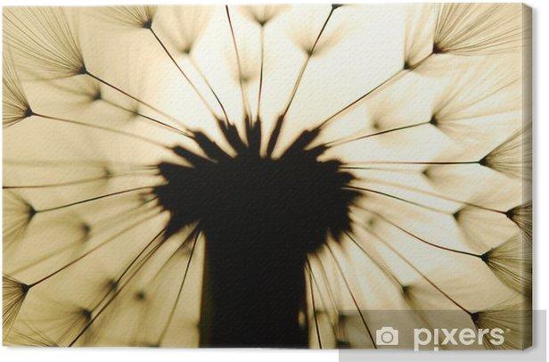dandelion seed Canvas Print - Flowers