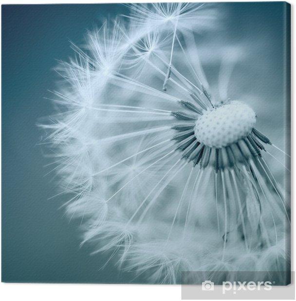 Dandelion Canvas Print - Themes