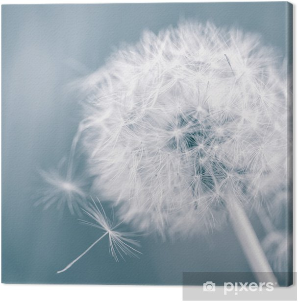 Dandelion Canvas Print - Themes