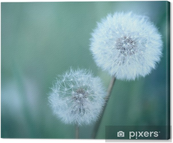 Dandelions Canvas Print - Themes