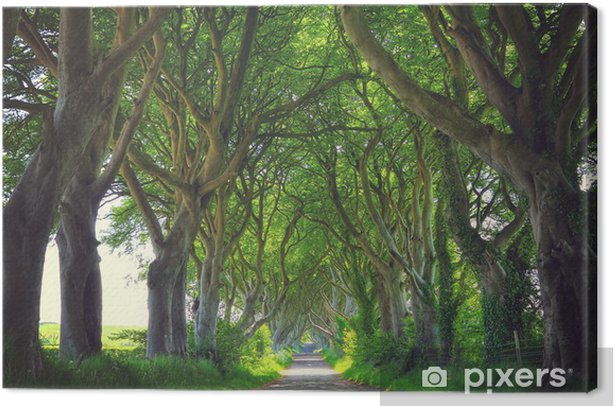 Dark Hedges trees Canvas Print - Themes
