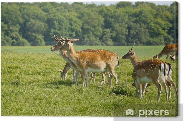 deer herd in Dyrehave park near Copenhagen Canvas Print - Forests
